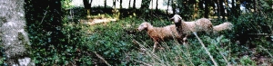 testapecore-spugnaweb